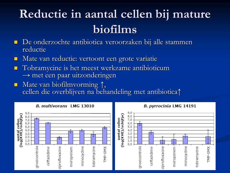 Reductie in aantal cellen bij mature biofilms De onderzochte antibiotica veroorzaken bij alle stammen reductie De onderzochte antibiotica veroorzaken