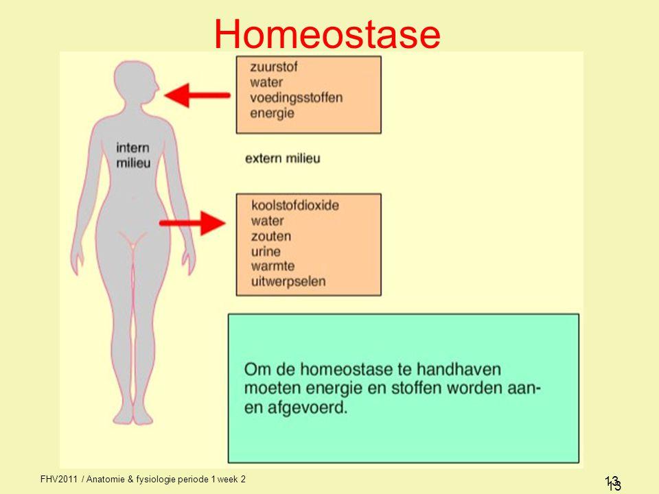 FHV2011 / Anatomie & fysiologie periode 1 week 2 13 Homeostase