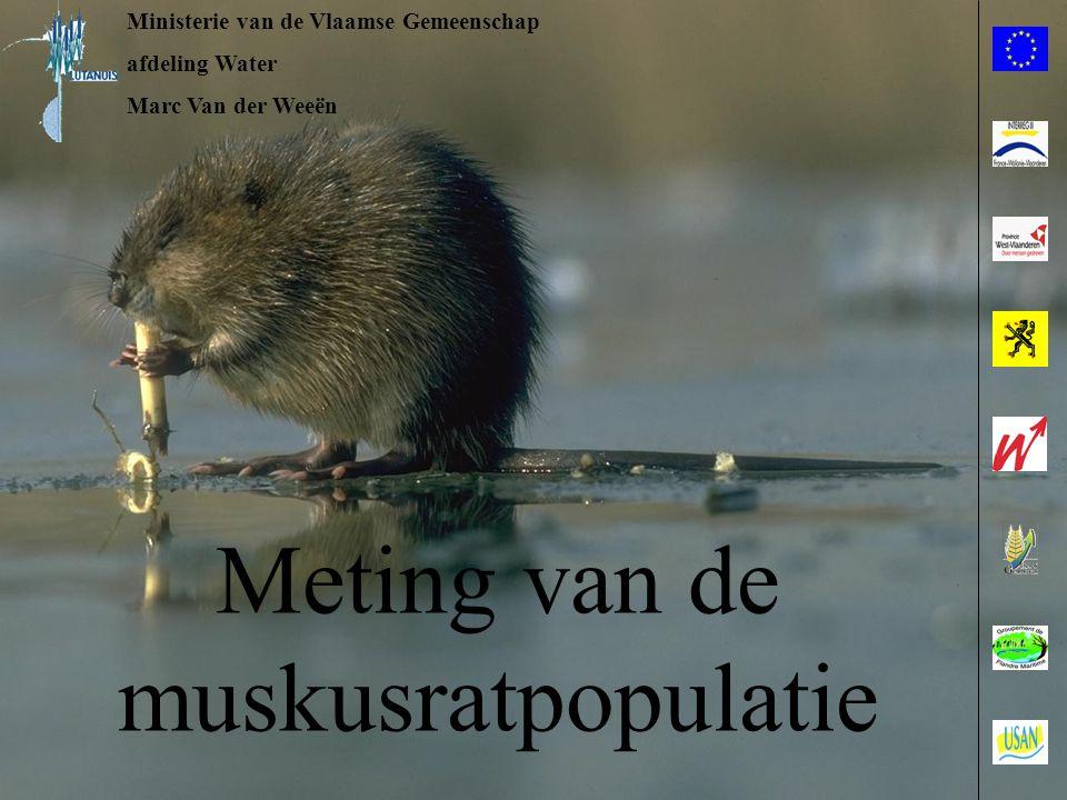 Ministerie van de Vlaamse Gemeenschap afdeling Water Marc Van der Weeën Meting van de muskusratpopulatie