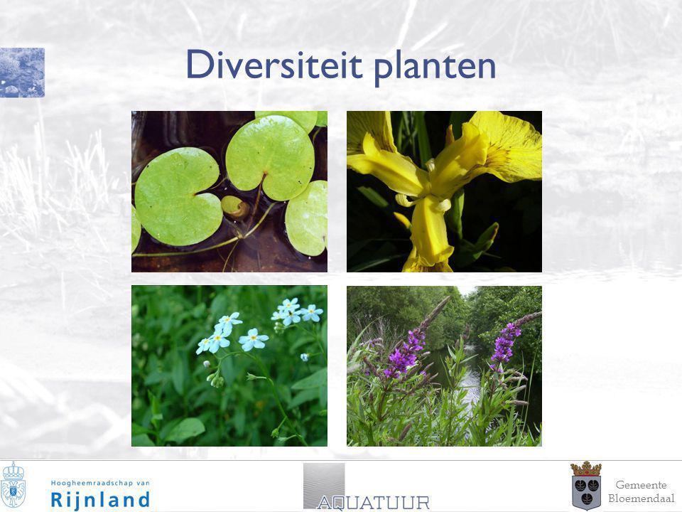 11 Diversiteit planten Gemeente Bloemendaal