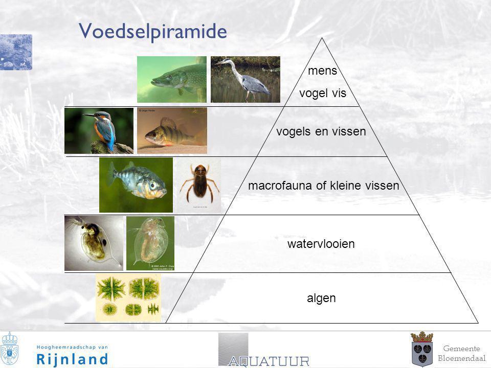 12 Voedselpiramide vogels en vissen mens vogel vis macrofauna of kleine vissen watervlooien algen Gemeente Bloemendaal