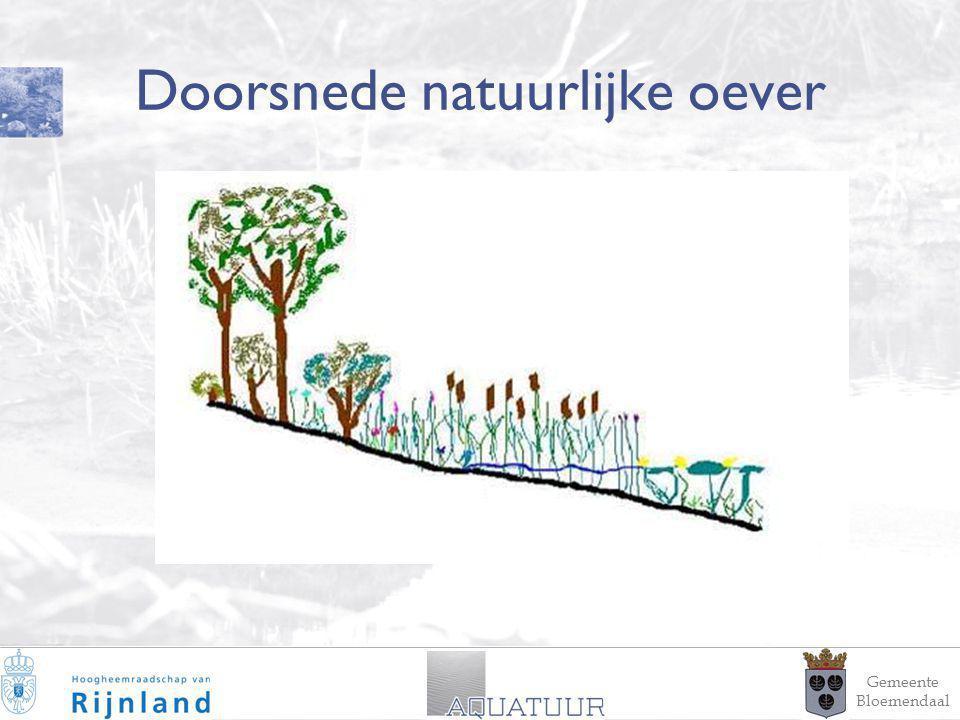 4 Doorsnede natuurlijke oever Gemeente Bloemendaal