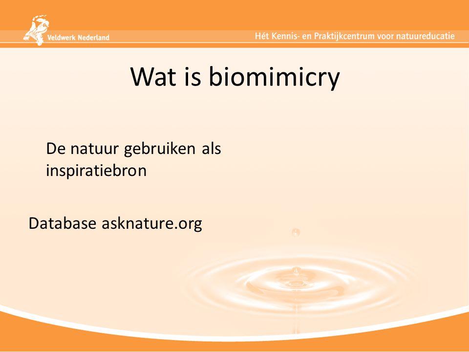 Wat is biomimicry De natuur gebruiken als inspiratiebron Database asknature.org