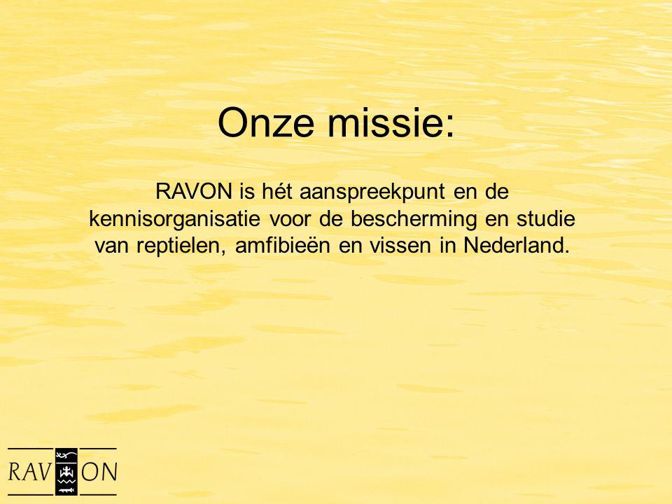 Onze missie: RAVON is hét aanspreekpunt en de kennisorganisatie voor de bescherming en studie van reptielen, amfibieën en vissen in Nederland.