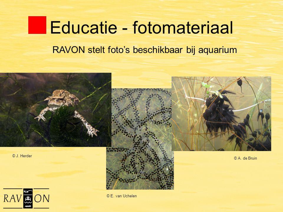 Educatie - fotomateriaal © J. Herder © A. de Bruin © E. van Uchelen RAVON stelt foto's beschikbaar bij aquarium