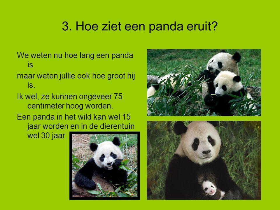 3.Hoe ziet een panda eruit.