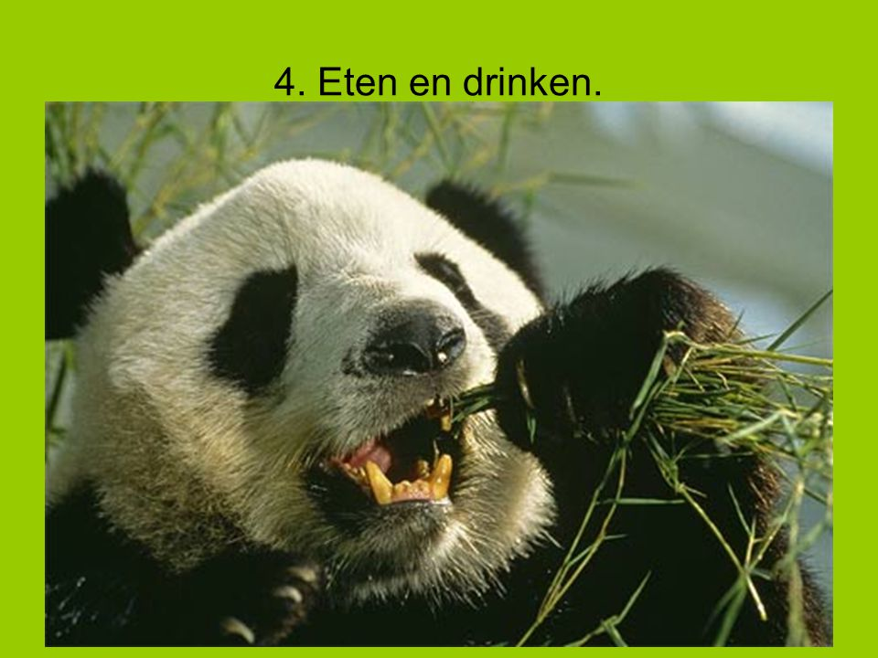 4. Eten en drinken.