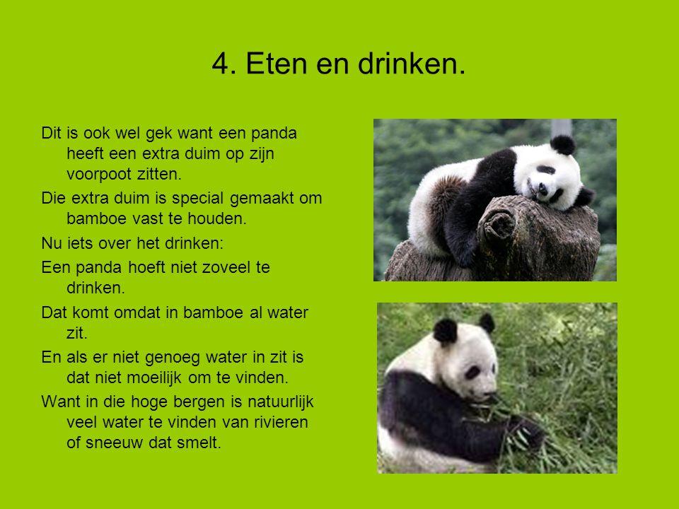 4.Eten en drinken. Dit is ook wel gek want een panda heeft een extra duim op zijn voorpoot zitten.