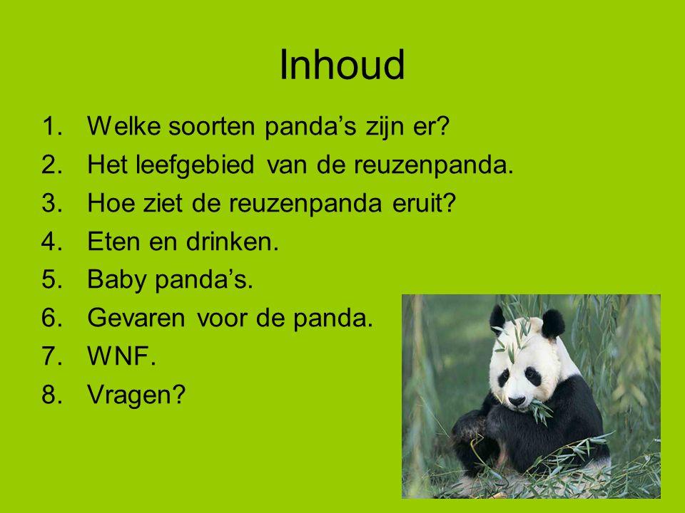 1. Welke panda's zijn er? De Reuzenpanda De kleine panda
