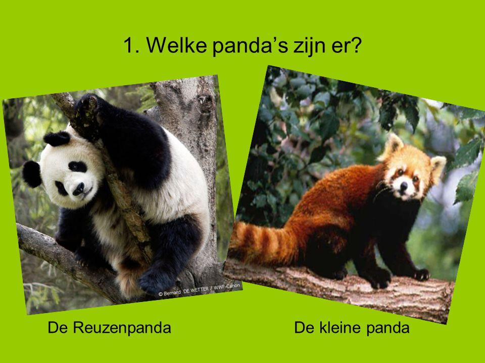 5. Baby panda's