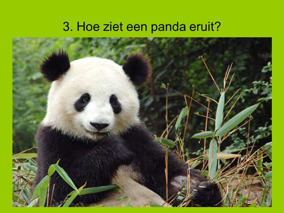 3. Hoe ziet een panda eruit?