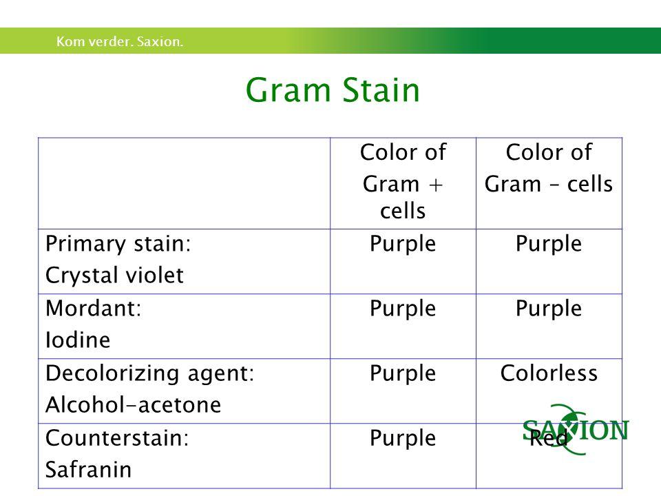 Kom verder. Saxion. Gram Stain Color of Gram + cells Color of Gram – cells Primary stain: Crystal violet Purple Mordant: Iodine Purple Decolorizing ag