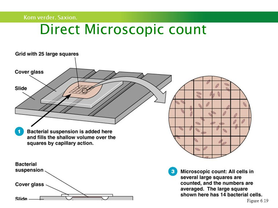 Kom verder. Saxion. Direct Microscopic count Figure 6.19