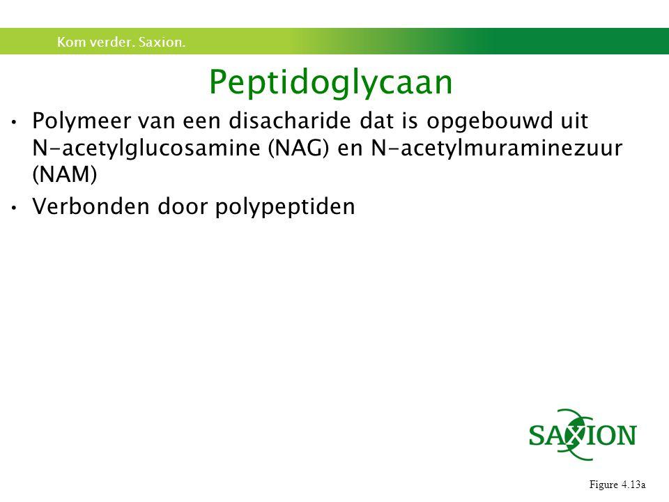 Kom verder. Saxion. Polymeer van een disacharide dat is opgebouwd uit N-acetylglucosamine (NAG) en N-acetylmuraminezuur (NAM) Verbonden door polypepti