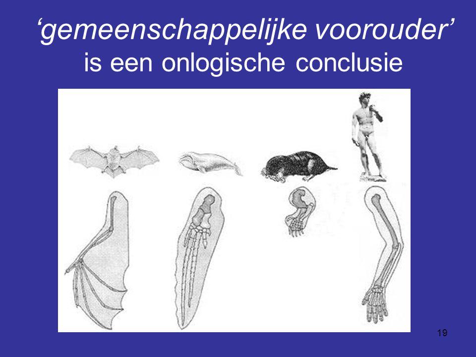20 Niet 'gemeenschappelijke voorouder' maar: zelfde ontwerp Overeenkomst wijst niet op herkomst maar op zelfde ontwerp.