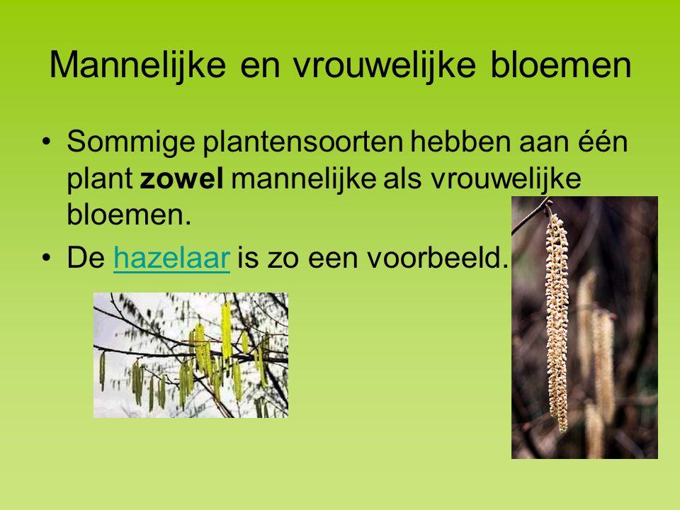 Mannelijke en vrouwelijke bloemen Sommige plantensoorten hebben aan één plant zowel mannelijke als vrouwelijke bloemen.