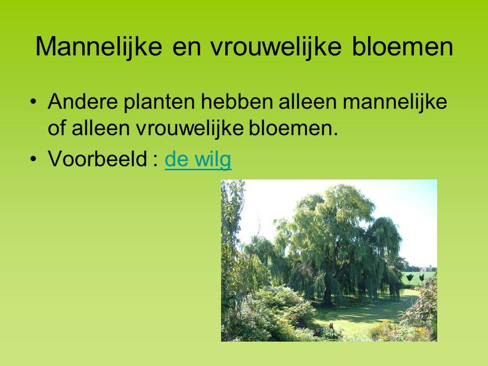 Mannelijke en vrouwelijke bloemen Andere planten hebben alleen mannelijke of alleen vrouwelijke bloemen.