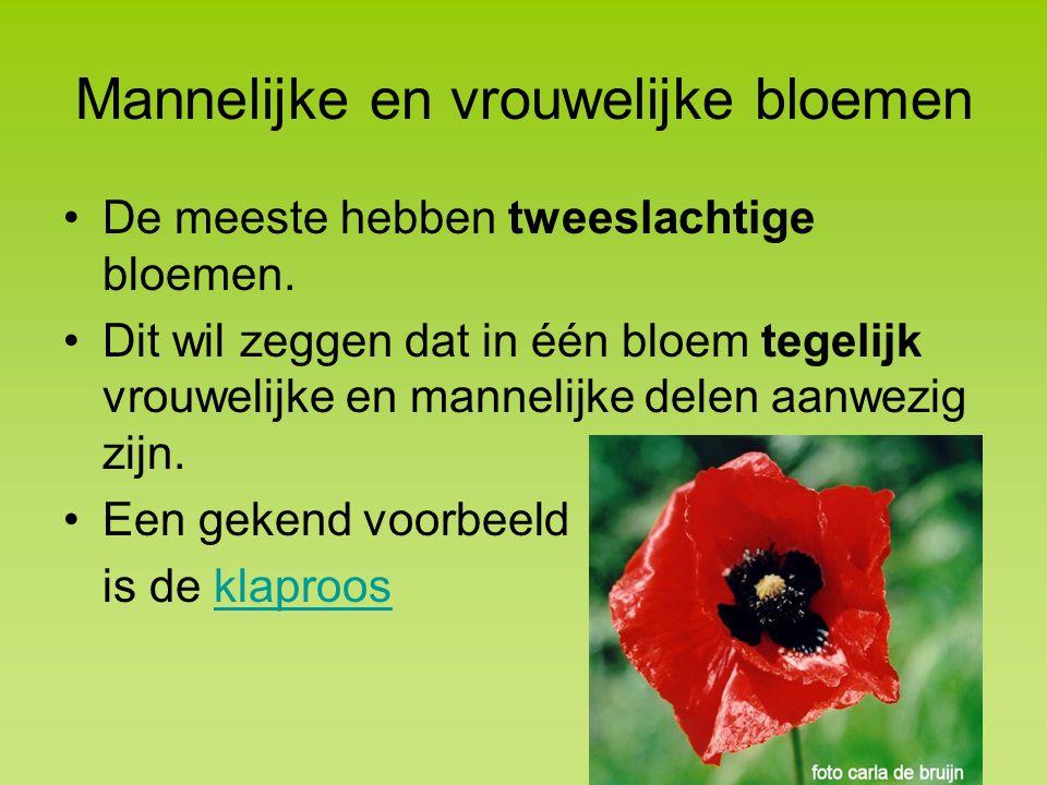 Mannelijke en vrouwelijke bloemen De meeste hebben tweeslachtige bloemen.