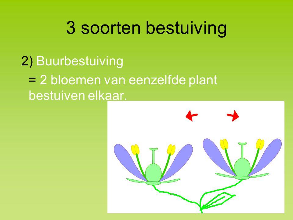 3 soorten bestuiving 2) Buurbestuiving = 2 bloemen van eenzelfde plant bestuiven elkaar.