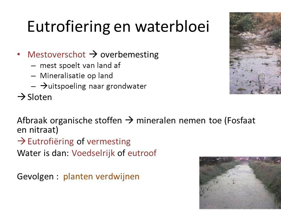Eutrofiering en waterbloei Mestoverschot  overbemesting – mest spoelt van land af – Mineralisatie op land –  uitspoeling naar grondwater  Sloten Af