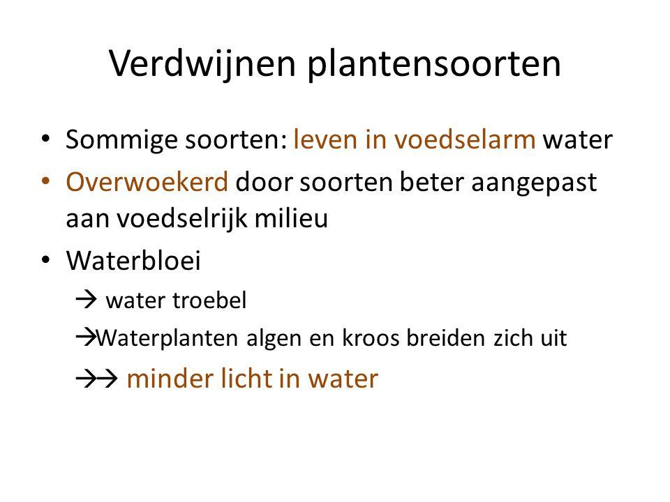 Verdwijnen plantensoorten Sommige soorten: leven in voedselarm water Overwoekerd door soorten beter aangepast aan voedselrijk milieu Waterbloei  water troebel  Waterplanten algen en kroos breiden zich uit  minder licht in water