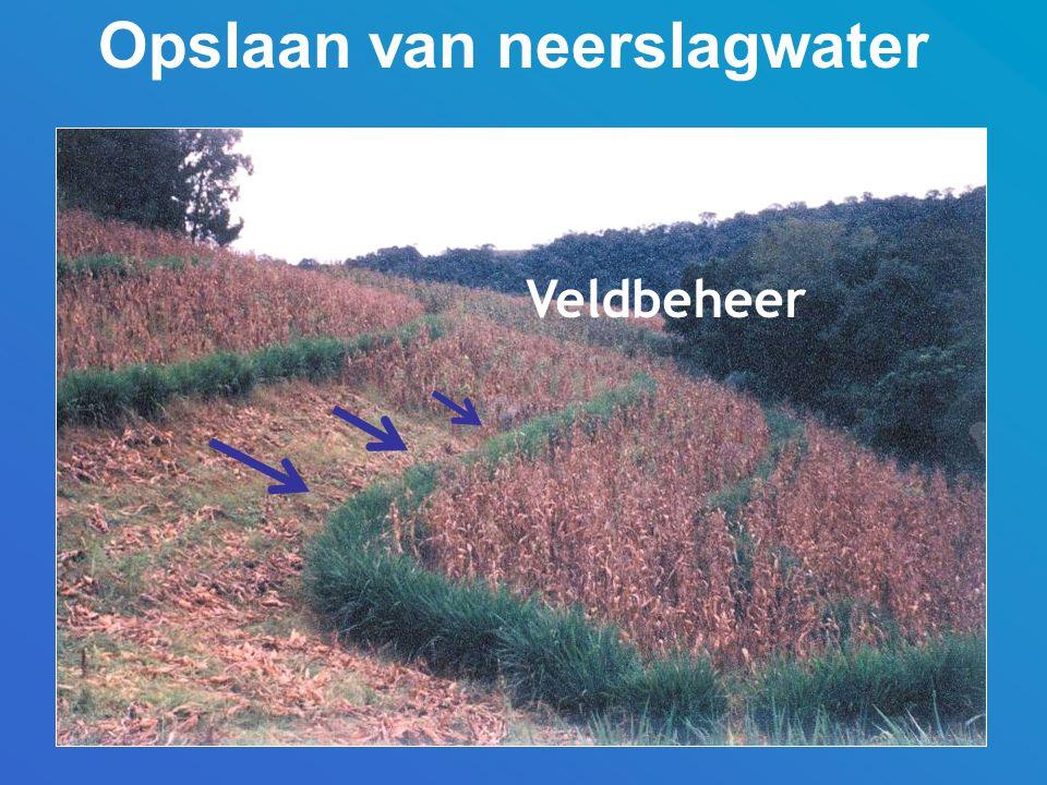 Opslaan van neerslagwater Veldbeheer
