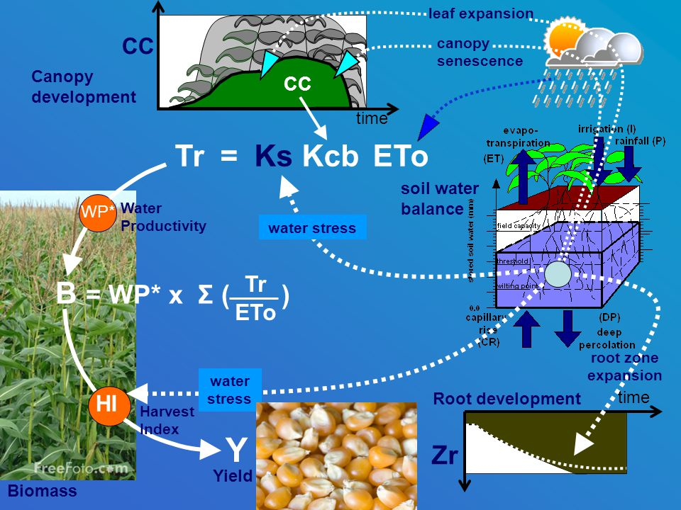 B = WP* x Σ ( ) Canopy development Root development Biomass Zr time soil water balance WP* Water Productivity leaf expansion canopy senescence root zone expansion Y Yield Tr = Ks Kcb ETo Tr ETo time CC HI water stress Harvest Index