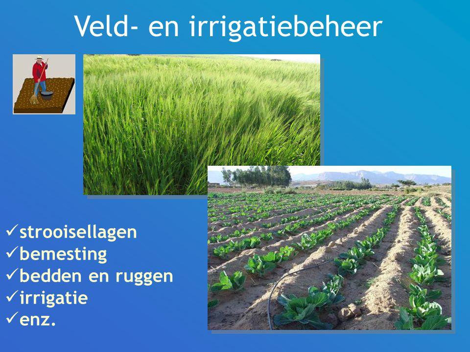 Veld- en irrigatiebeheer strooisellagen bemesting bedden en ruggen irrigatie enz.