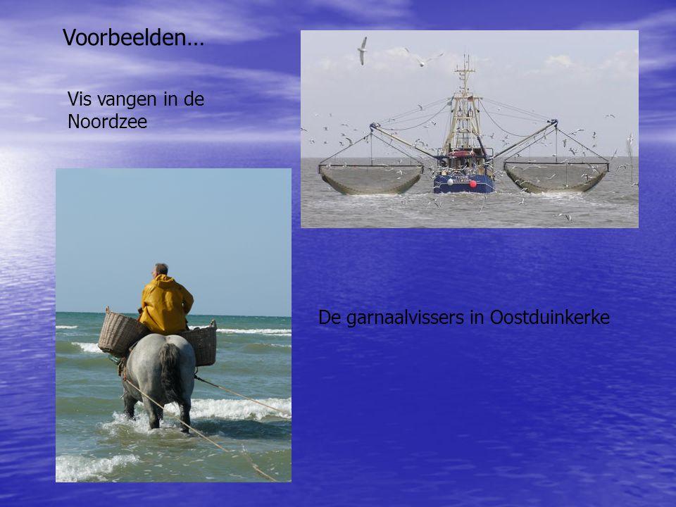 Vis vangen in de Noordzee De garnaalvissers in Oostduinkerke Voorbeelden…