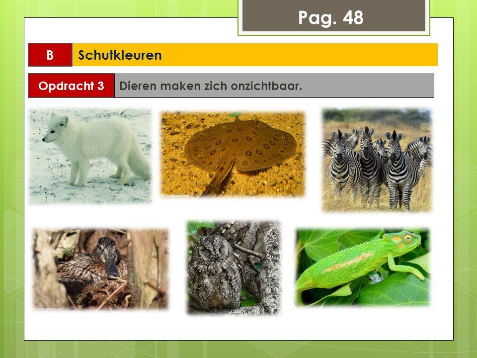 Opdracht 3 Dieren maken zich onzichtbaar. Pag. 48 B Schutkleuren