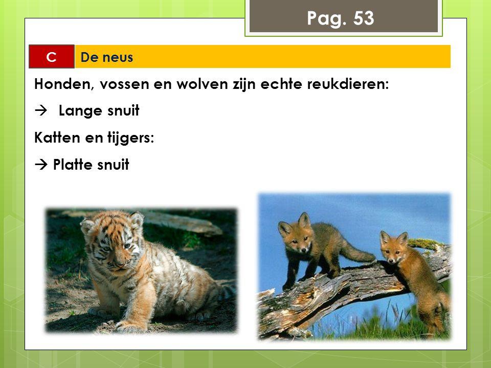 Pag. 53 C De neus Honden, vossen en wolven zijn echte reukdieren:  Lange snuit Katten en tijgers:  Platte snuit