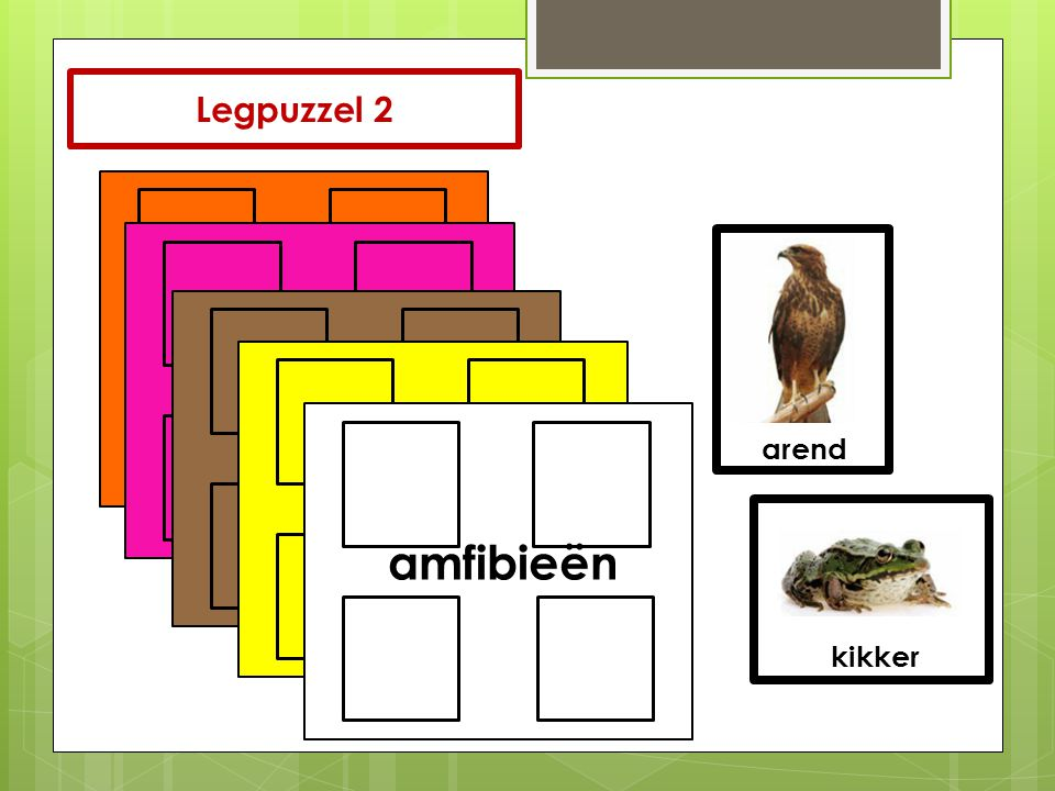 Legpuzzel 2 zoogdierenreptielenvogelsvissenamfibieën arend kikker