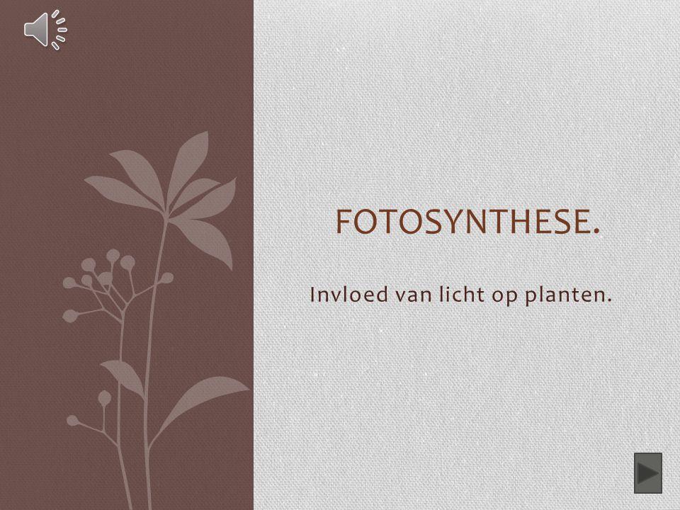 Invloed van licht op planten. FOTOSYNTHESE.