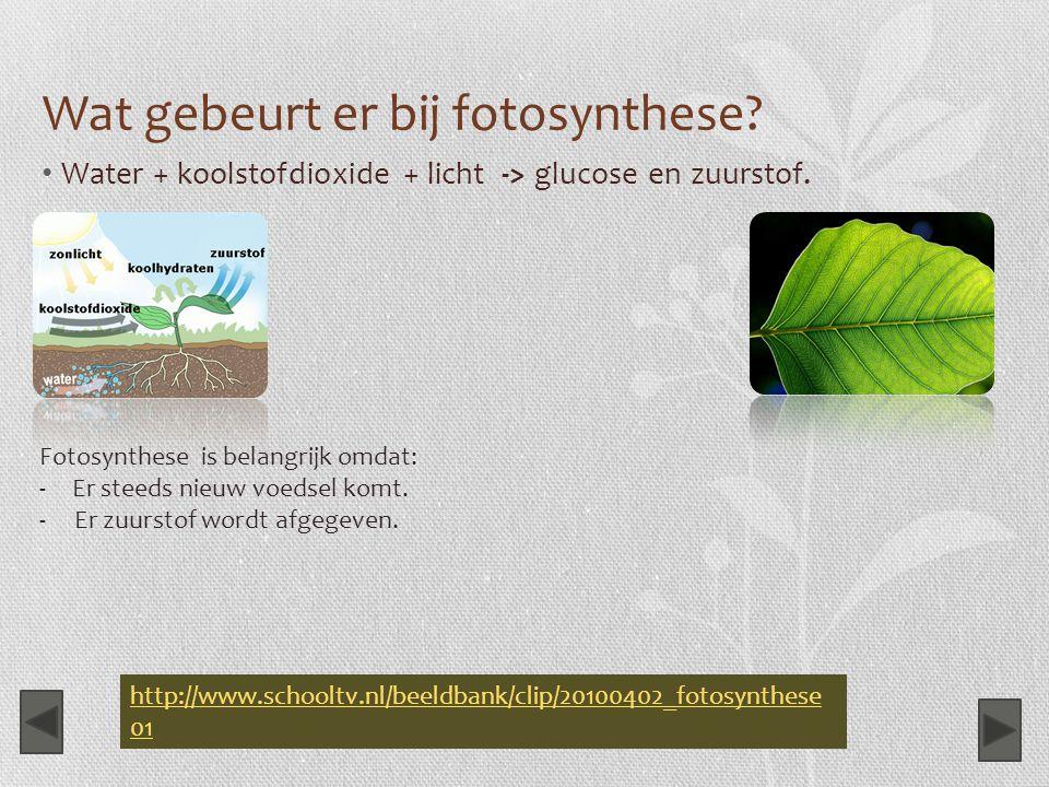 Wat gebeurt er bij fotosynthese? Water + koolstofdioxide + licht -> glucose en zuurstof. Fotosynthese is belangrijk omdat: -Er steeds nieuw voedsel ko