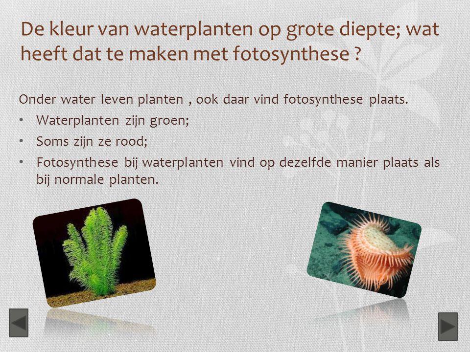 De kleur van waterplanten op grote diepte; wat heeft dat te maken met fotosynthese ? Onder water leven planten, ook daar vind fotosynthese plaats. Wat