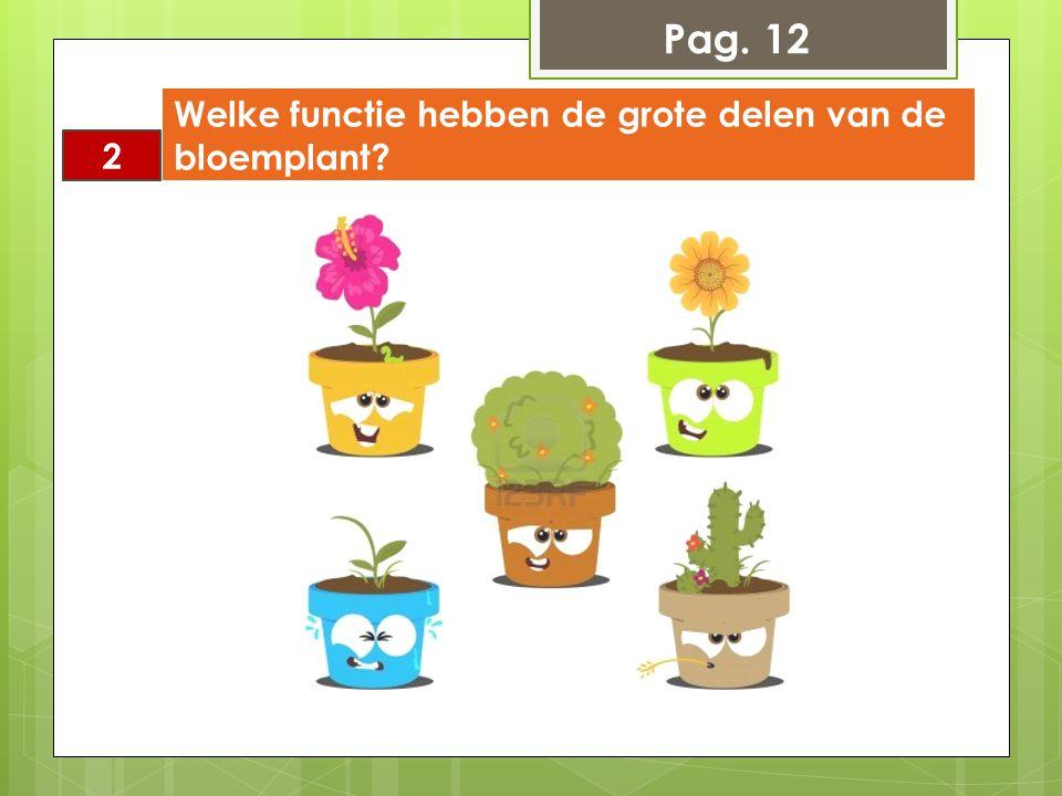 2 Welke functie hebben de grote delen van de bloemplant? Pag. 12