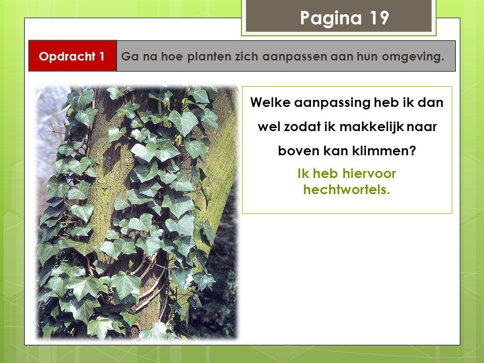 Pagina 19 Opdracht 1 Ga na hoe planten zich aanpassen aan hun omgeving. Welke aanpassing heb ik dan wel zodat ik makkelijk naar boven kan klimmen? Ik