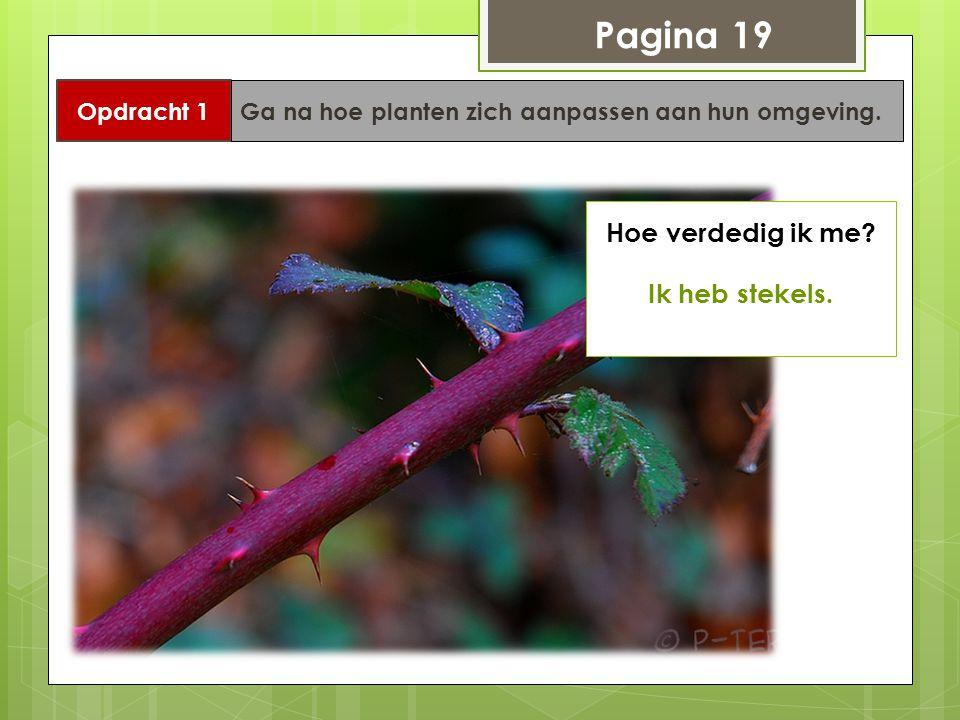 Pagina 19 Opdracht 1 Ga na hoe planten zich aanpassen aan hun omgeving. Hoe verdedig ik me? Ik heb stekels.