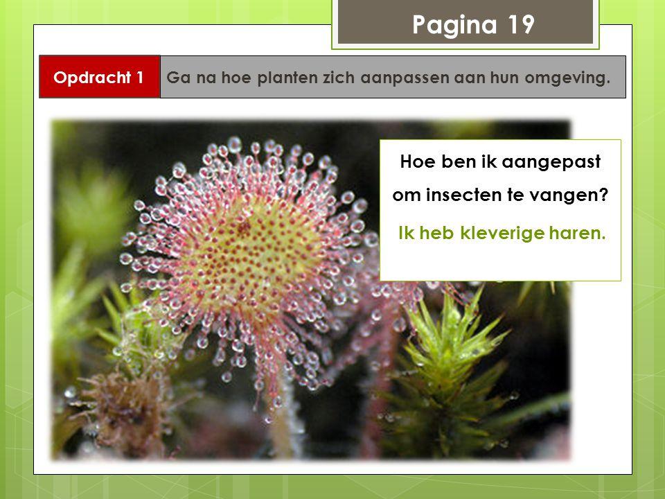 Pagina 19 Opdracht 1 Ga na hoe planten zich aanpassen aan hun omgeving. Hoe ben ik aangepast om insecten te vangen? Ik heb kleverige haren.