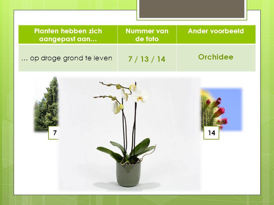 Planten hebben zich aangepast aan… Nummer van de foto Ander voorbeeld … op droge grond te leven 7 / 13 / 14 Orchidee 71314