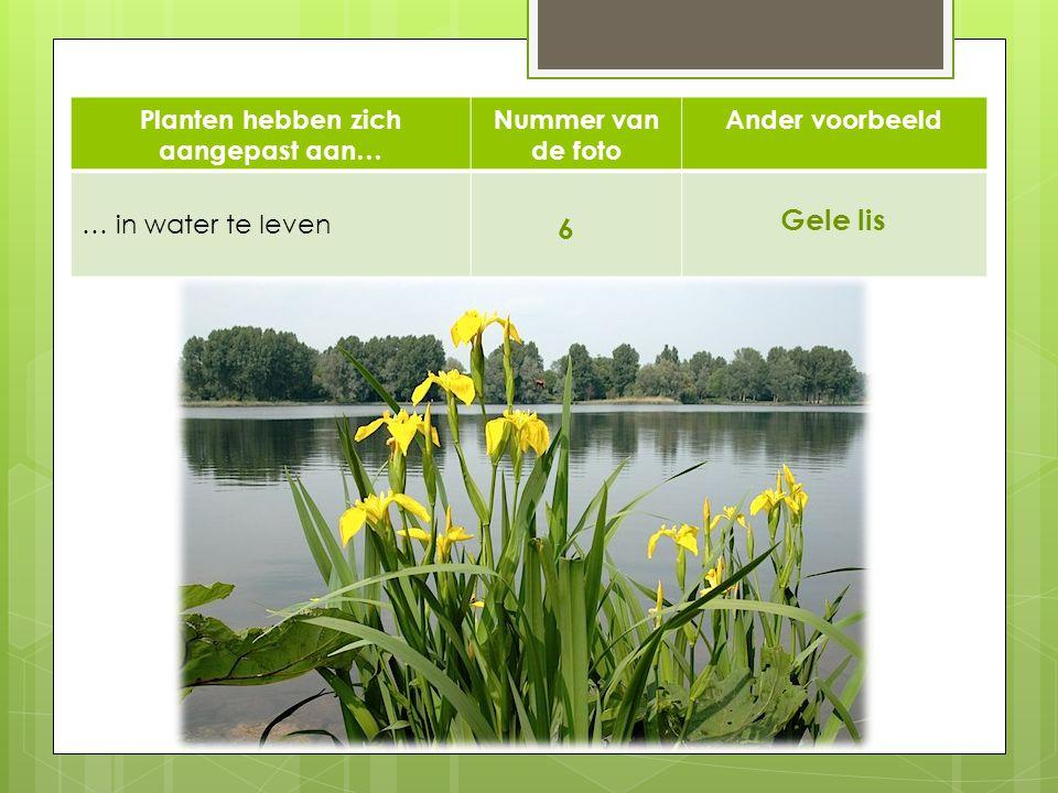 Planten hebben zich aangepast aan… Nummer van de foto Ander voorbeeld … in water te leven 6 Gele lis 6