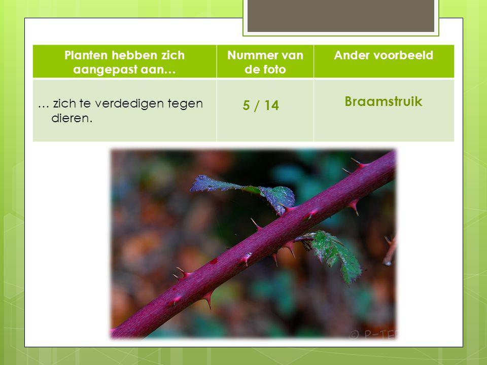 Planten hebben zich aangepast aan… Nummer van de foto Ander voorbeeld … zich te verdedigen tegen dieren. 5 / 14 Braamstruik 514