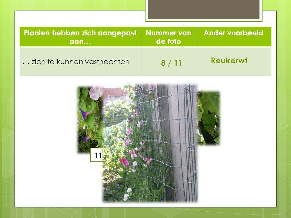 Planten hebben zich aangepast aan… Nummer van de foto Ander voorbeeld … zich te kunnen vasthechten 8 / 11 Reukerwt 11 8