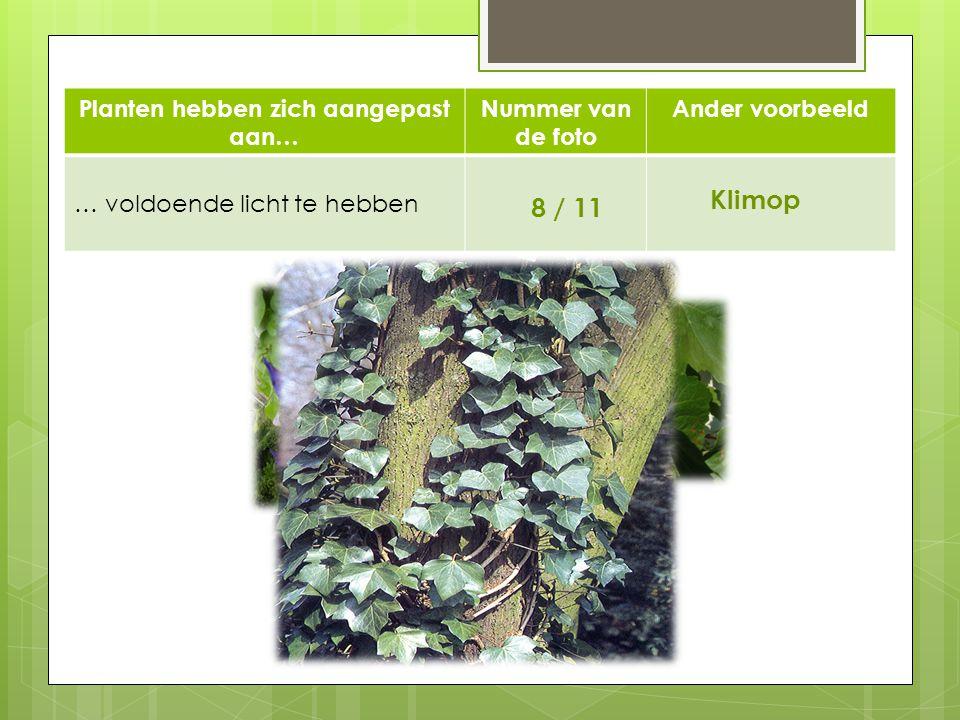 Planten hebben zich aangepast aan… Nummer van de foto Ander voorbeeld … voldoende licht te hebben 8 / 11 Klimop 11 8