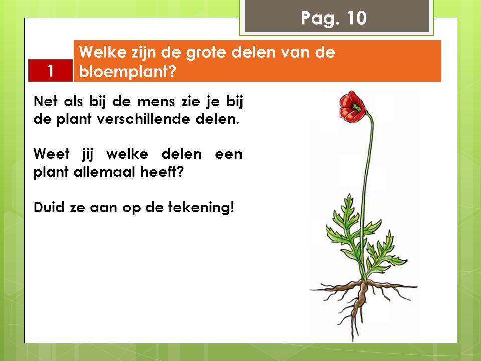 Net als bij de mens zie je bij de plant verschillende delen. Weet jij welke delen een plant allemaal heeft? Duid ze aan op de tekening! 1 Welke zijn d