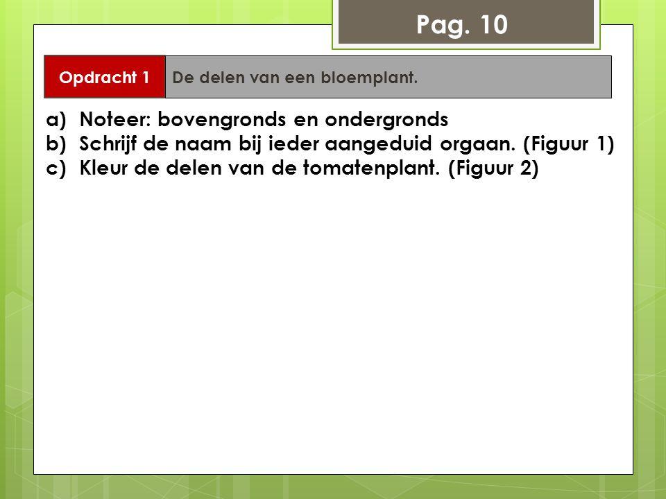 Opdracht 1 De delen van een bloemplant. Pag. 10 a)Noteer: bovengronds en ondergronds b)Schrijf de naam bij ieder aangeduid orgaan. (Figuur 1) c)Kleur