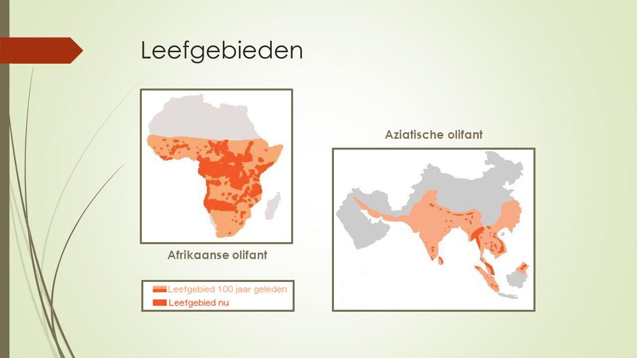 Leefgebieden Afrikaanse olifant Aziatische olifant
