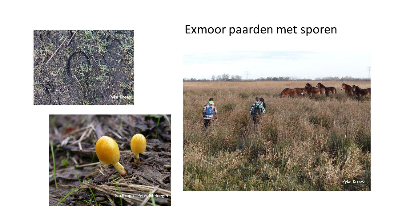 Exmoor paarden met sporen Pyke Kroes Saxifraga - Peter Meineger