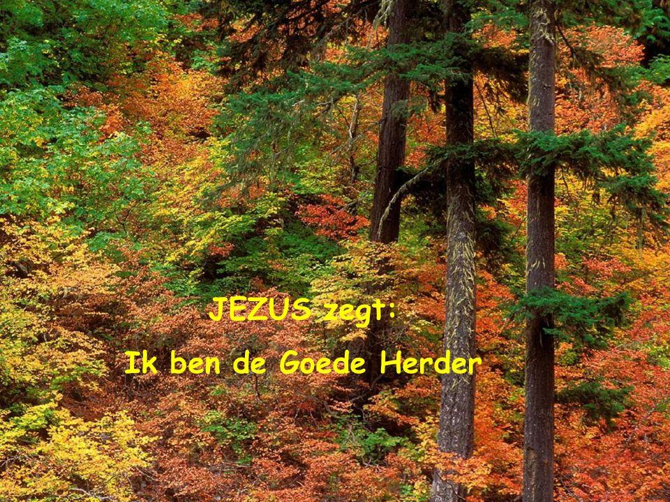 JEZUS zegt: Ik ben de Goede Herder