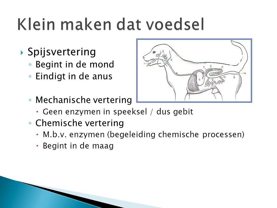  Spijsvertering ◦ Begint in de mond ◦ Eindigt in de anus ◦ Mechanische vertering  Geen enzymen in speeksel / dus gebit ◦ Chemische vertering  M.b.v